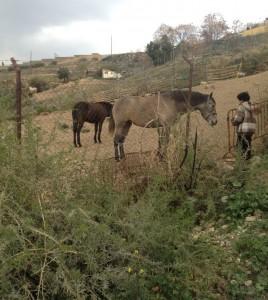 Horses in Granada